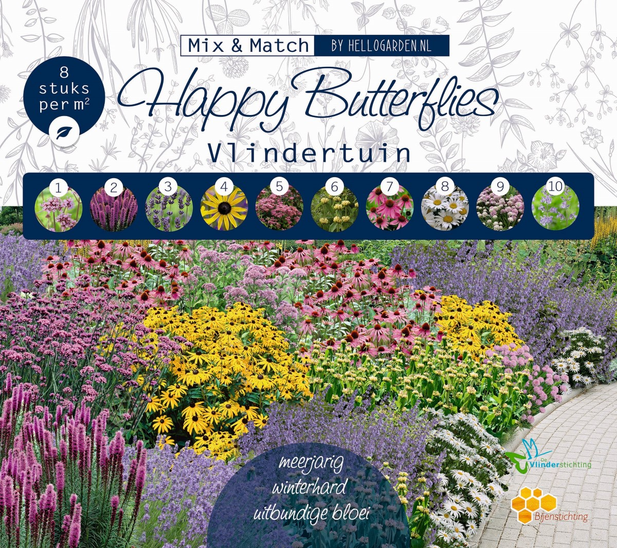 HAPPY BUTTERFLIES