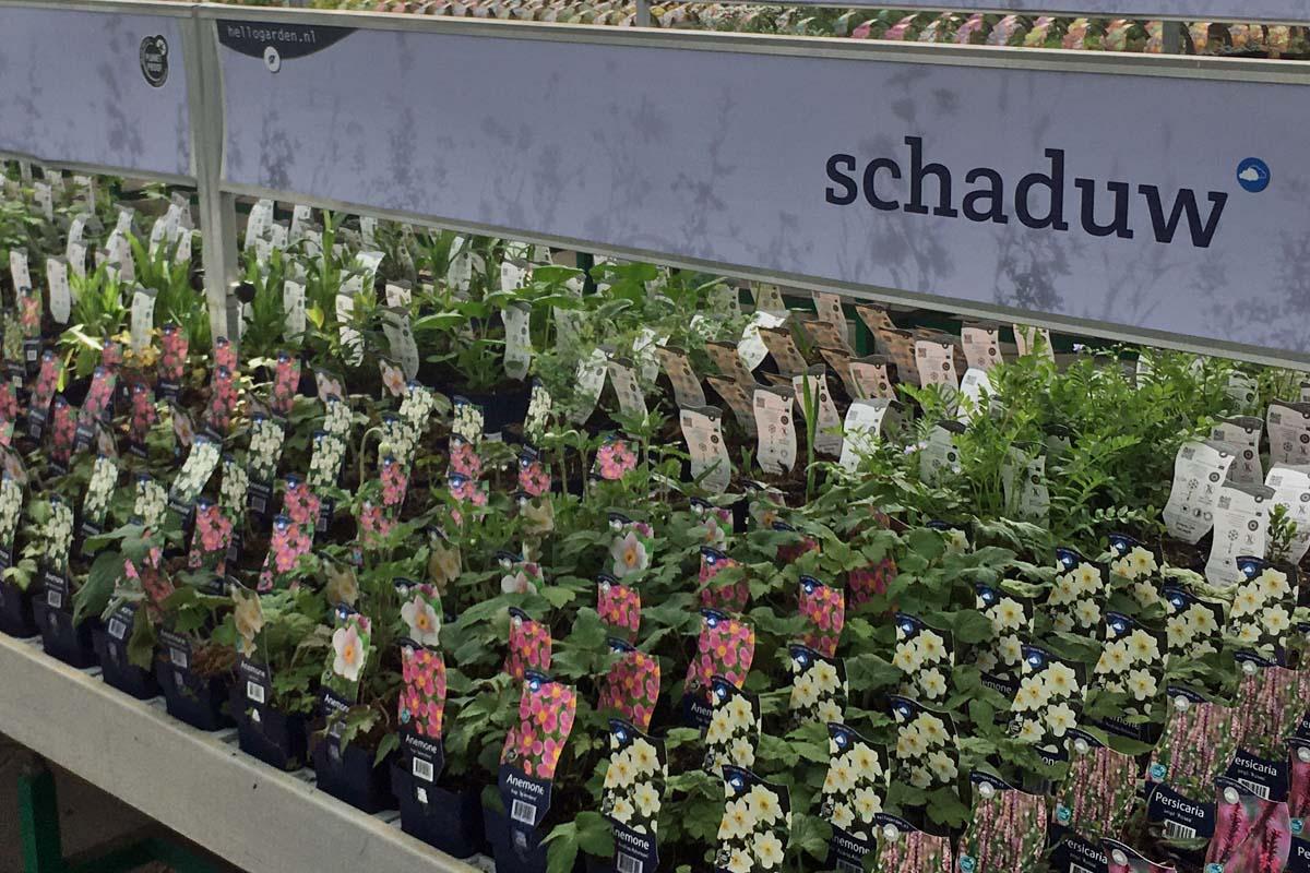 Hello Garden - schaduwplanten